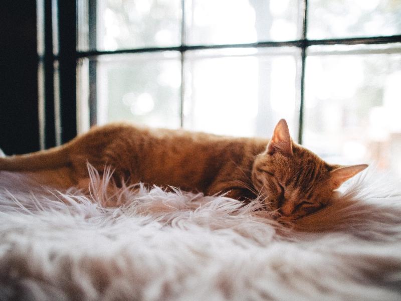 GAto 20 Dicas para Dormir Melhor